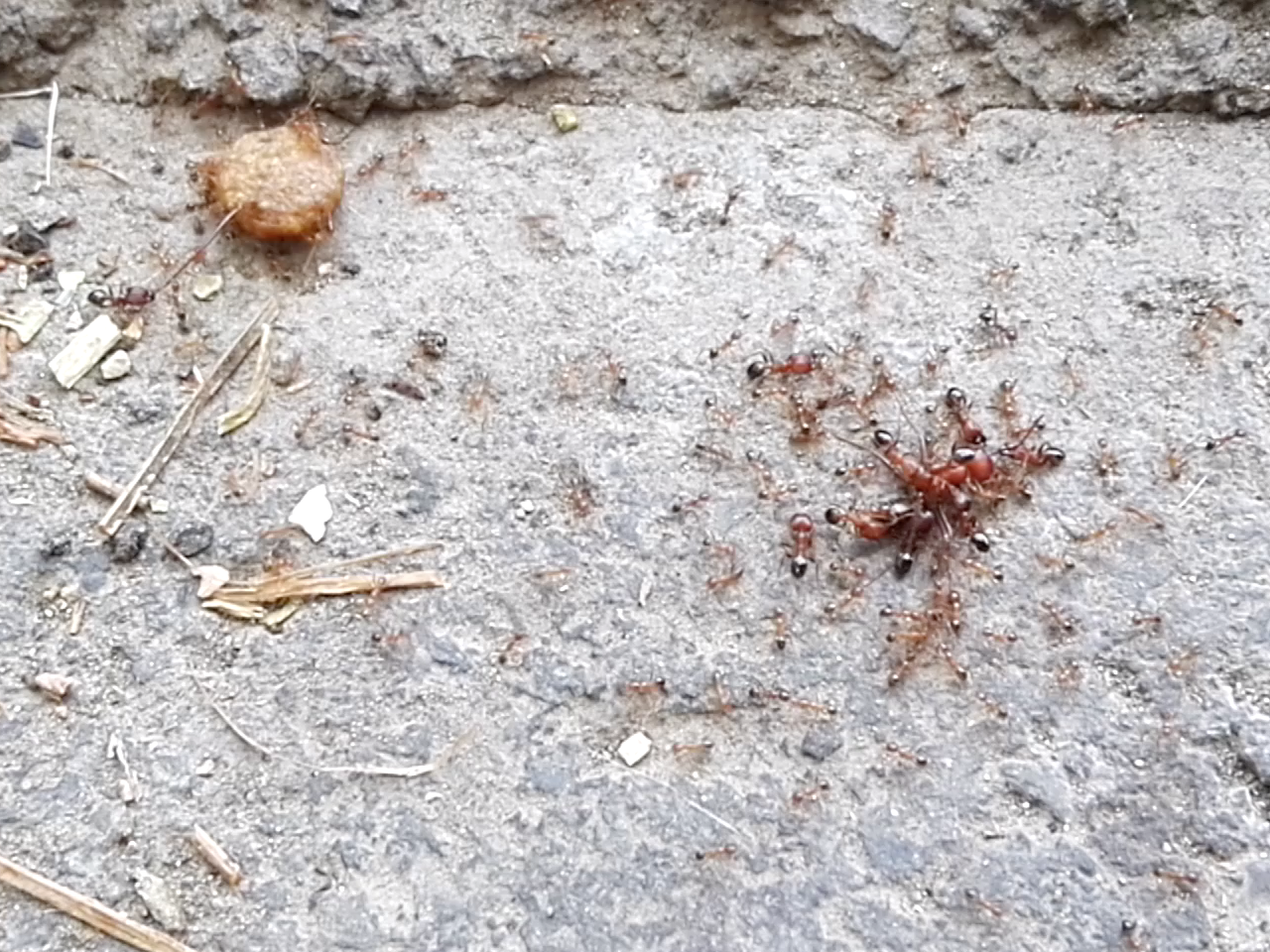 Death of an ant